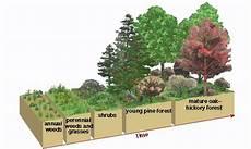Secondary Succession Ecological Succession Webquest