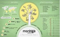 Moringa Chart The Truth About Moringa Oleifera Survival Gardener