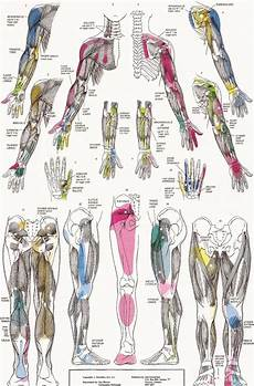 Referred Chart Trigger Points 2a Jpg 1237 215 1879 Trigger Points
