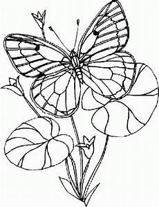 Ausmalbilder Tiere Schmetterling Ausmalbild Tiere Schmetterling Ausmalbilder1001 De