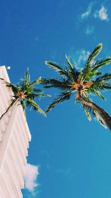 Tree Designs Tumblr Palm Trees On Tumblr