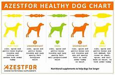 Ideal Weight For Dogs Weight Chart Evaluating The Dogs Weight Dog Rehabilitation