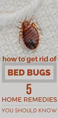 How Do You Get Bed Bugs How To Get Rid Of Bed Bugs 5 Home Remedies You Should
