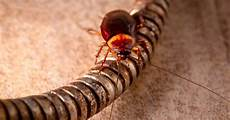 Common Household Pests 6 Most Common Household California Pests Pest Pros Solutions