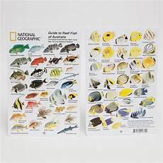 Reef Fish Identification Chart National Geographic Snorkeler Fish Id Card Australia