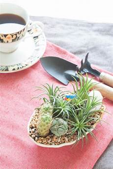Unique Planters For Succulents Unique Planters For Succulents Creative Succulent