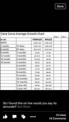 Rottweiler Growth Chart Female Rottweiler Growth Chart Jesjes