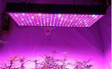 Led Lights Or Hps For Growing 5 Truths About Growing Bigger Weed Buds With Led Than Hps