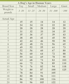 Puppy Age Chart Think You Know Your Dog S Age In Human Years You Ve