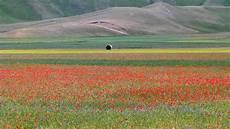 parco fiorito castelluccio di norcia la fiorita the flowering hd