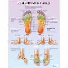 Foot Anatomy Chart Anatomical Charts And Posters Anatomy Charts Foot