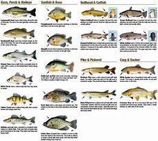 Maine Fish Species Chart A Guide To Catchable Freshwater Fish Connecticut Fishing