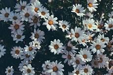 aesthetic flower desktop wallpaper eat explore encourage desktop wallpapers springflowers