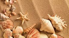 Sea Shells Background Sea Shell Wallpapers Wallpaper Cave