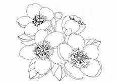 Blumen Malvorlagen Kostenlos Zum Ausdrucken Pdf Malvorlagen Blumen Kostenlos 2 Malvorlagen Blumen