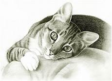 Cat Drawing Images Cat I Sketch Pets