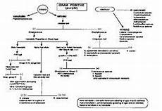 Gram Positive And Gram Negative Chart Gram Negative Identification Flow Chart Positive Bacteria