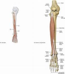 Right Knee Anatomy Knee Amp Leg Atlas Of Anatomy