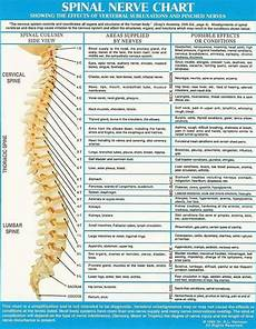 Chart Of Nerves In Back Pinterest Discover And Save Creative Ideas