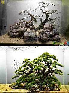 Aqua Designs Inc Simon S Aquascape Blog Evolution Rank 49 Iaplc 2014 By
