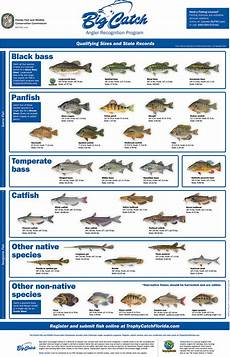 Florida Fish Id Chart Trophy Catch Angler Recognition Programs Florida Go Fishing