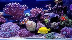 Saltwater Fish Tank Lights Starting A Saltwater Aquarium