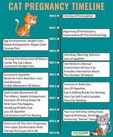 Pregnancy Timeline Chart Cat Pregnancy How To Tell If A Cat Is And All