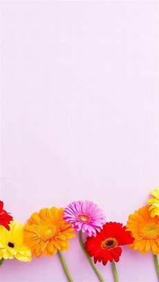 flower arrangements iphone wallpaper pin de andrea chan en wallpapers bright wallpaper