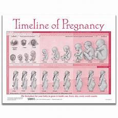 Pregnancy Timeline Chart Weekly Fetal Development Chart Childbirth Graphics