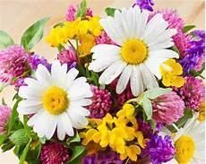 flower wallpapers for pc desktop summer flower desktop wallpaper wallpapersafari