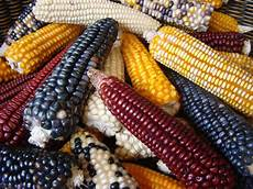 Corn Varieties Corn The Studies Myths Facts And Tips Enjoy Diet234