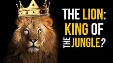 King Of The Jungle Designs The Lion King Of The Jungle David Rives Youtube