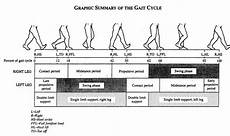 Gait Cycle Gait Cycle Basics Part 5 Swing Phase Our Final