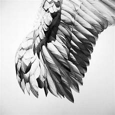 Drawing Of Angel Wings Black Ink Pen Drawings By Alessandro Paglia