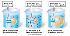 Potato Osmosis Lab Potato Osmosis Experiment Aj X Biolit