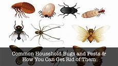 Common Household Pests 17 Common Household Bugs And Pests Pressurewashertoday Com