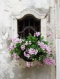 fioriere per davanzale finestra francia fioriere finestra fioriere per davanzale e gerani
