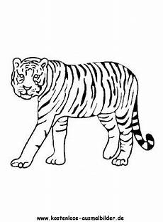 ausmalbild tiger 6 zum ausdrucken