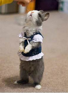 rabbit clothes for bunnies 15 absolutely adorable animals in costumes bunny guff