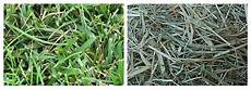 Fescue Hay Types Of Hay The Equinest