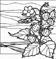Malvorlagen Landschaften Gratis Bilder Erdbeerpflanze 2 Ausmalbild Malvorlage Landschaften