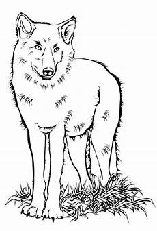 Bilder Zum Ausmalen Wolf Ausmalbilder Malvorlagen Wildtiere Kostenlos Zum