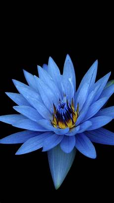 live flower wallpaper iphone sony xperia z stock blue flower wallpapers hd wallpapers