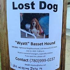 Lost Dog Poster Maker 20 Steps To Take If You Lose Your Pup Barkpost