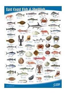 Shellfish Chart East Coast Fish And Shellfish Amazon Co Uk Kitchen Amp Home