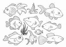 Fisch Bilder Zum Ausmalen Und Ausdrucken Kostenlos Ausmalbilder Fisch Kostenlos Malvorlagen Zum Ausdrucken