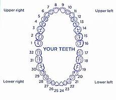 Dental Tooth Number Chart Tooth Talk With Dr William Schlotz January 2013