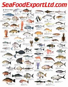 Seafood Chart Seafood Chart Http Www Craigmarine Info Images