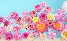 Flower Wallpaper For Laptop by Pin By On Desktop Wallpapers In 2019 Flower