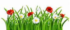 grass pictures clip cliparts co